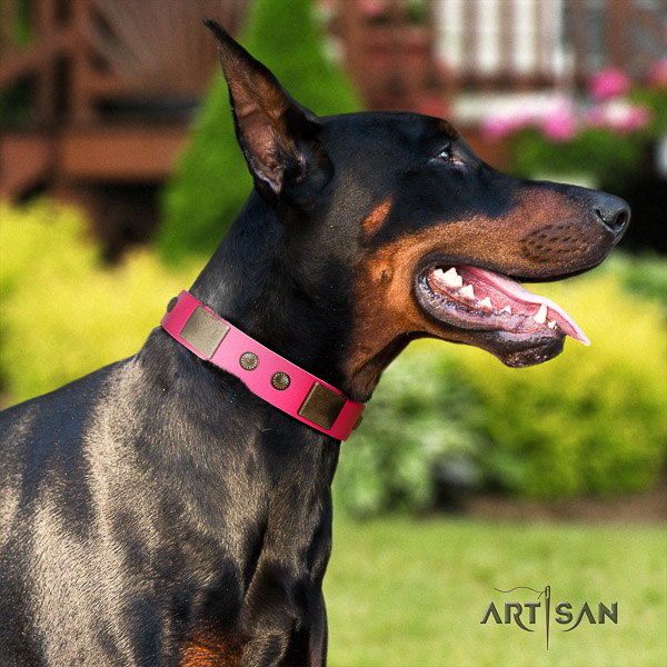Doberman walking natural leather collar with studs for your four-legged friend