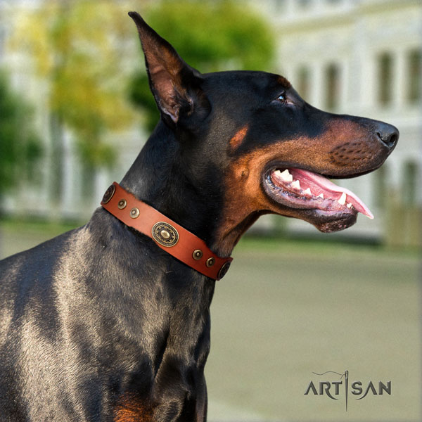 Doberman full grain leather dog collar with decorations for your stylish doggie
