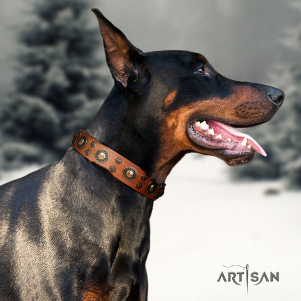 Doberman full grain genuine leather dog collar with adornments for your impressive dog