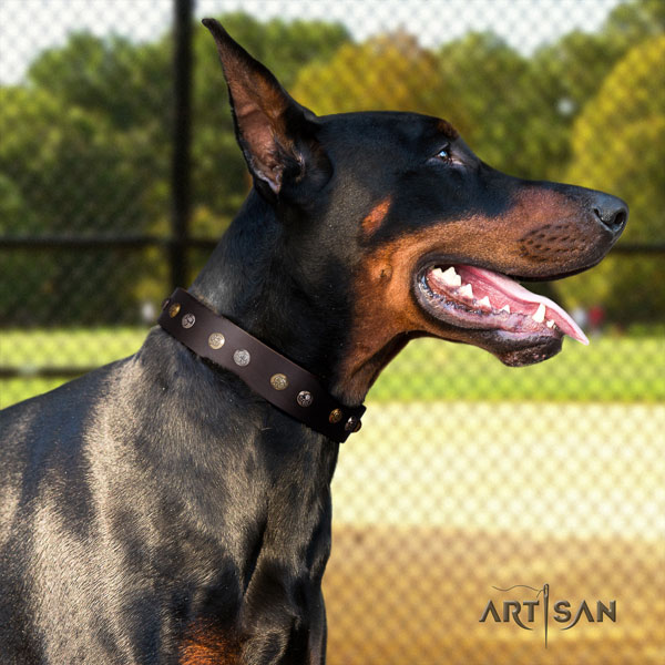 Doberman full grain natural leather dog collar with adornments for your beautiful pet