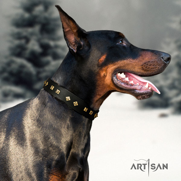 Doberman full grain natural leather dog collar with decorations for your stylish four-legged friend