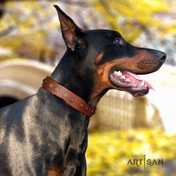 Doberman full grain natural leather dog collar with studs for your lovely pet