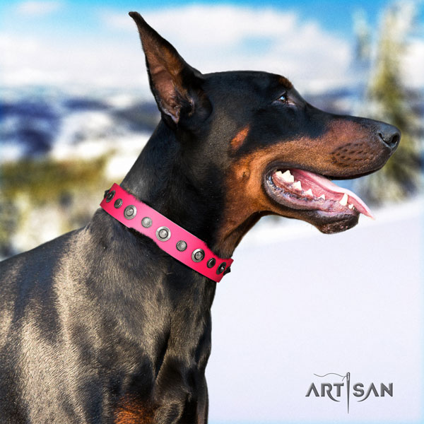 Doberman top notch full grain genuine leather collar with studs for your dog