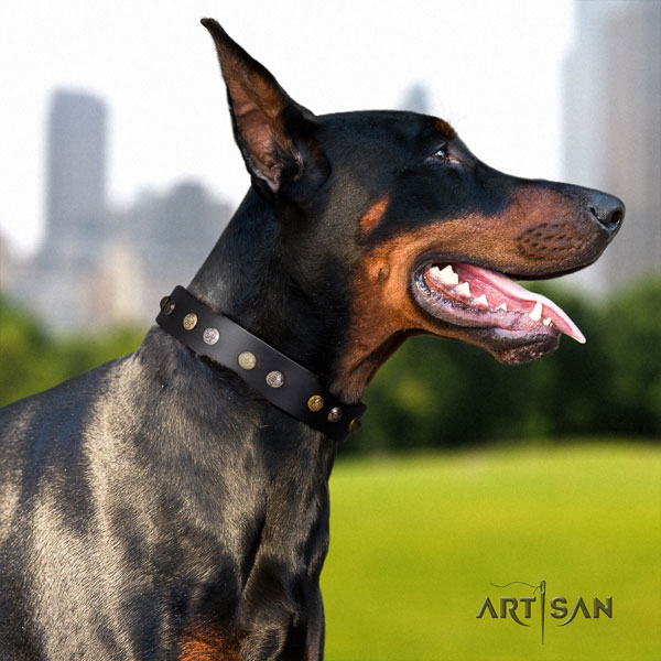 Doberman full grain natural leather dog collar with adornments for your attractive doggie