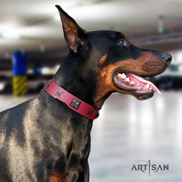 Doberman full grain genuine leather dog collar with adornments for your handsome dog