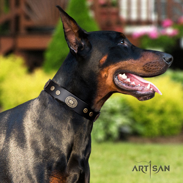Doberman full grain natural leather dog collar with studs for your impressive dog
