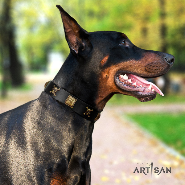 Doberman comfy wearing full grain leather collar with embellishments for your four-legged friend