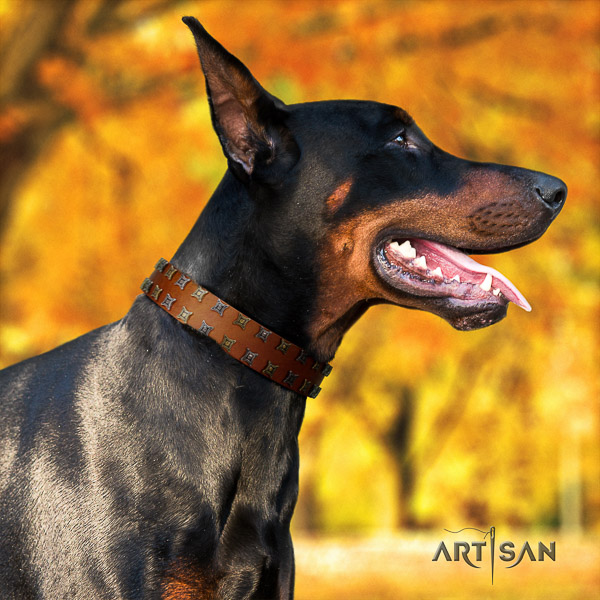 Doberman everyday use full grain leather collar with adornments for your four-legged friend