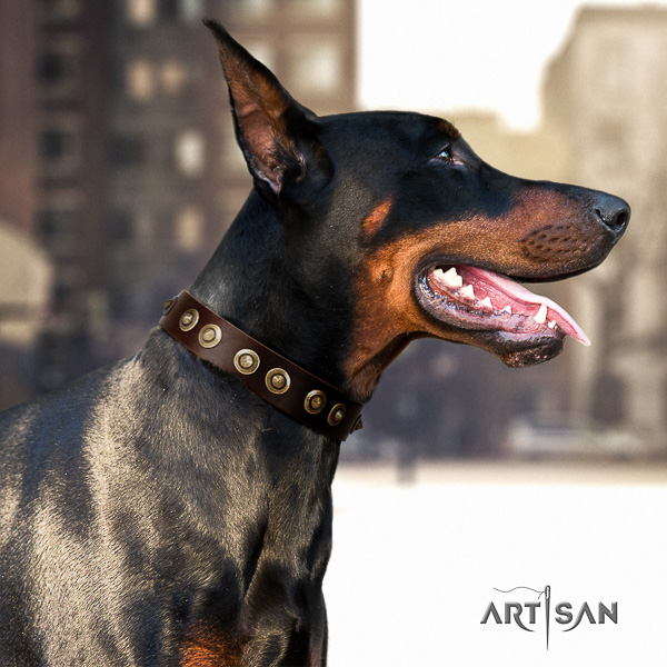 Doberman everyday walking genuine leather collar with embellishments for your canine