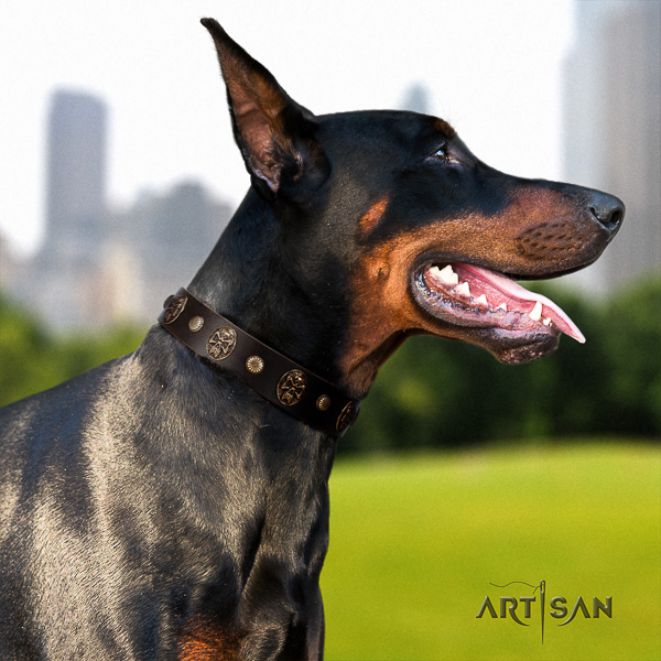 Doberman comfortable wearing full grain genuine leather collar with decorations for your pet
