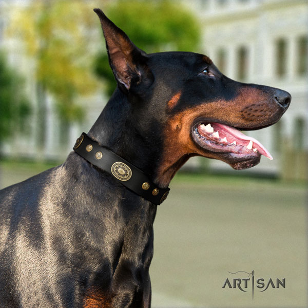 Doberman full grain natural leather dog collar with embellishments for your attractive pet