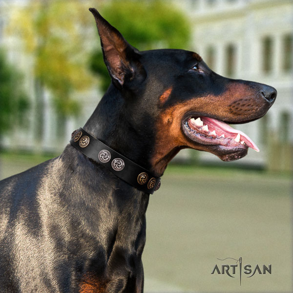Doberman full grain natural leather dog collar with embellishments for your impressive dog