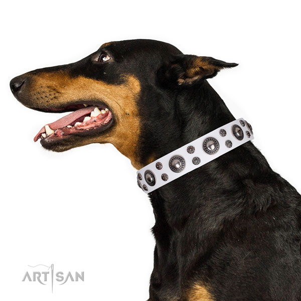 Doberman studded full grain genuine leather dog collar for walking