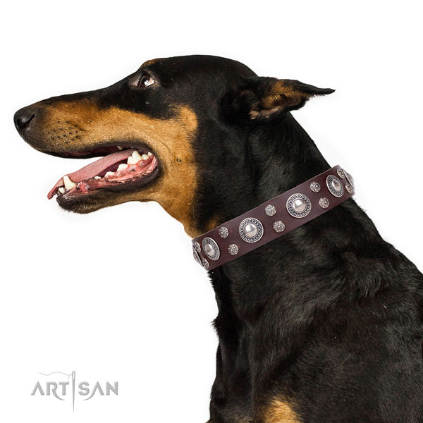 Doberman adorned full grain genuine leather dog collar for walking