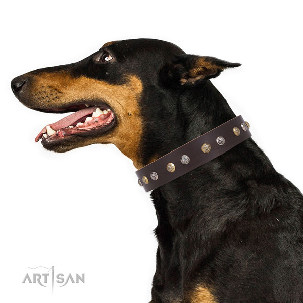 Doberman embellished full grain natural leather dog collar for daily walking