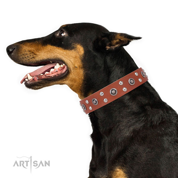 Doberman impressive full grain leather dog collar for stylish walking