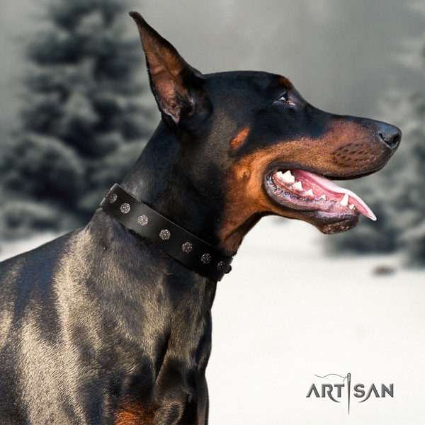 Doberman full grain leather dog collar with studs for your beautiful four-legged friend