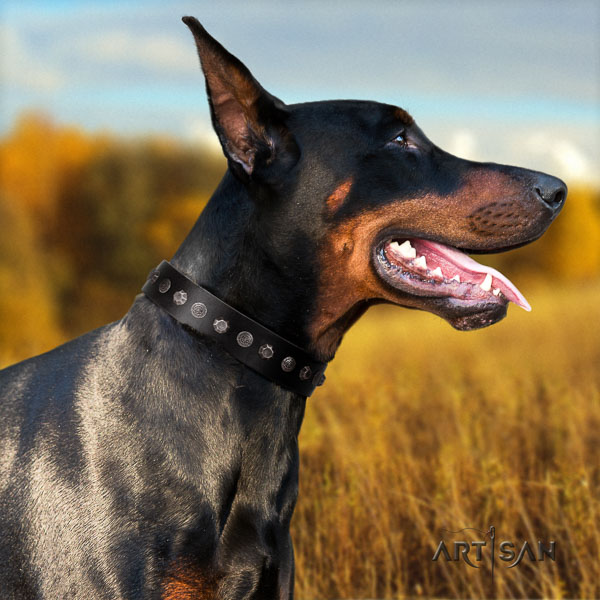 Doberman natural genuine leather dog collar with adornments for your impressive dog