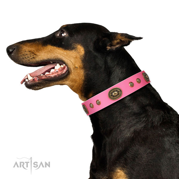 Doberman adorned leather dog collar for comfortable wearing