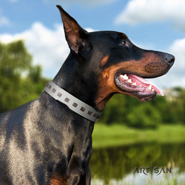 Doberman full grain natural leather dog collar with adornments for your handsome pet