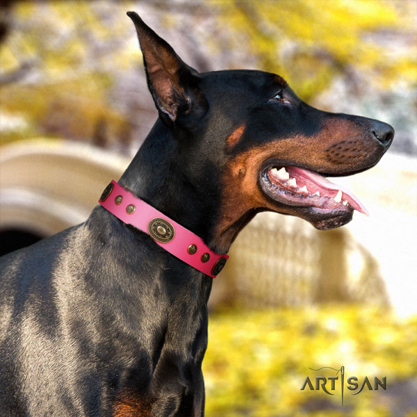 Doberman best quality full grain natural leather collar with studs for your dog