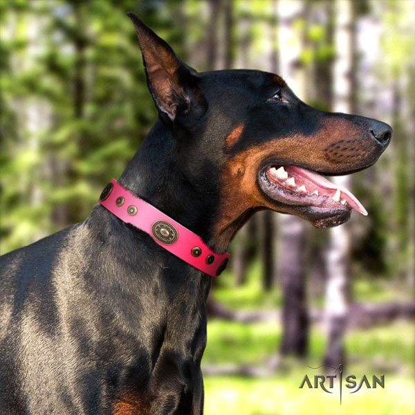 Doberman full grain natural leather dog collar with adornments for your attractive canine