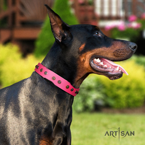 Doberman leather dog collar with embellishments for your stylish pet