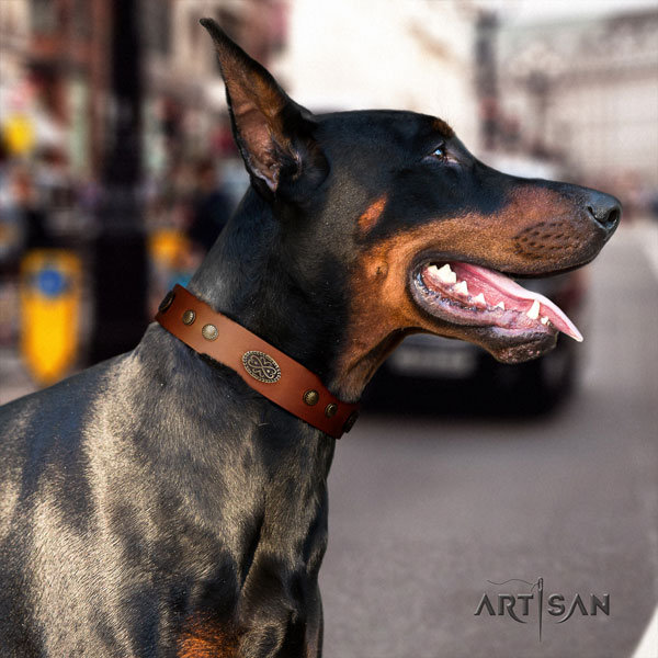 Doberman amazing full grain leather collar with studs for your canine