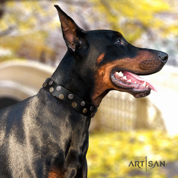 Doberman leather dog collar with adornments for your stylish dog
