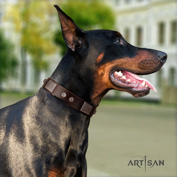 Doberman full grain natural leather dog collar with adornments for your handsome four-legged friend