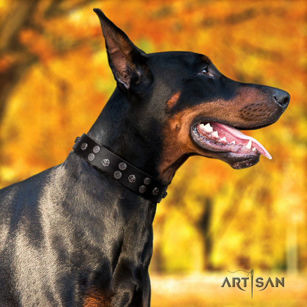 Doberman genuine leather dog collar with studs for your beautiful doggie