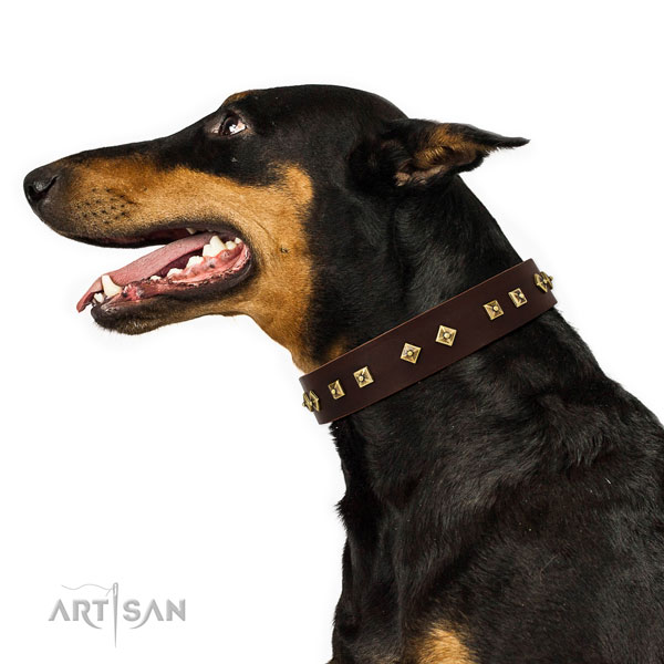 Doberman decorated leather dog collar for stylish walking