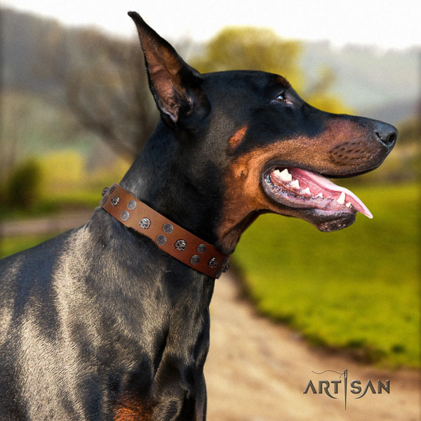 Doberman full grain genuine leather dog collar with adornments for your attractive pet