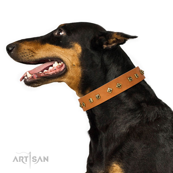 Doberman fashionable full grain natural leather dog collar for easy wearing