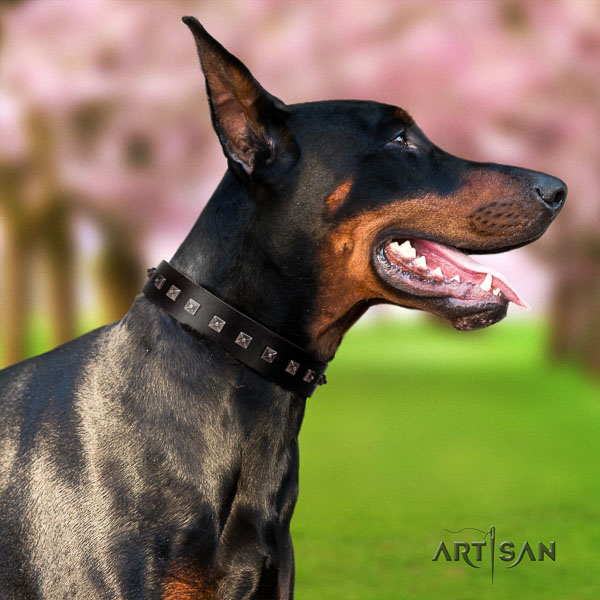 Doberman full grain leather dog collar with embellishments for your attractive doggie