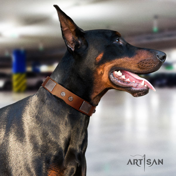 Doberman natural genuine leather dog collar with adornments for your attractive doggie