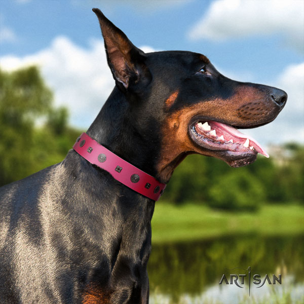 Doberman full grain natural leather dog collar with adornments for your impressive pet