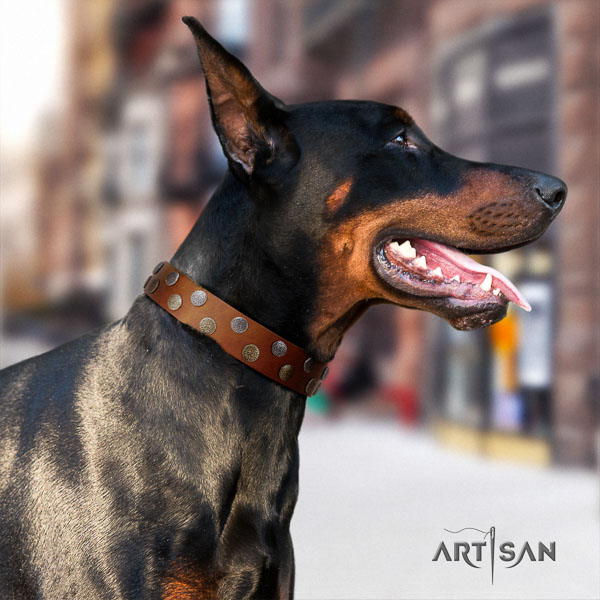 Doberman full grain natural leather dog collar with embellishments for your impressive doggie
