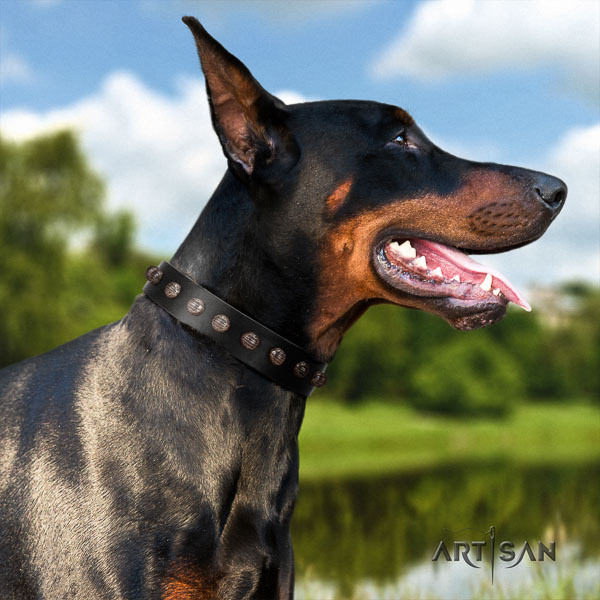 Doberman natural genuine leather dog collar with embellishments for your beautiful dog