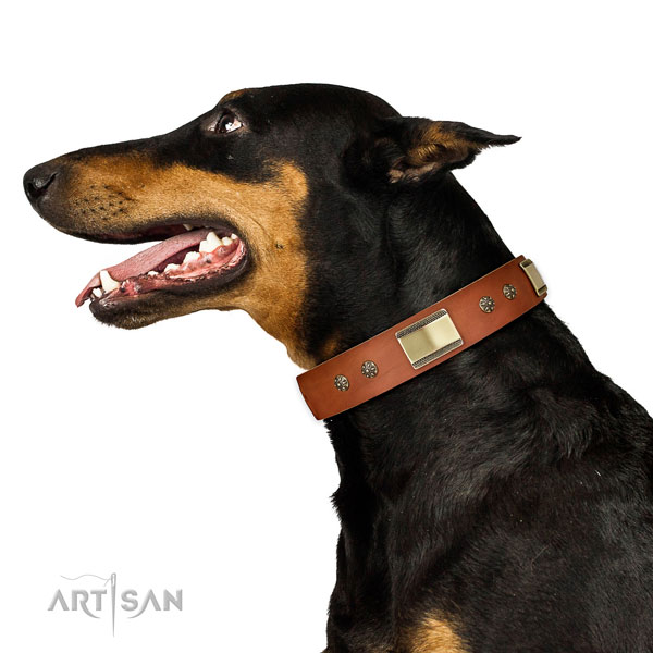 Doberman extraordinary full grain genuine leather dog collar for walking