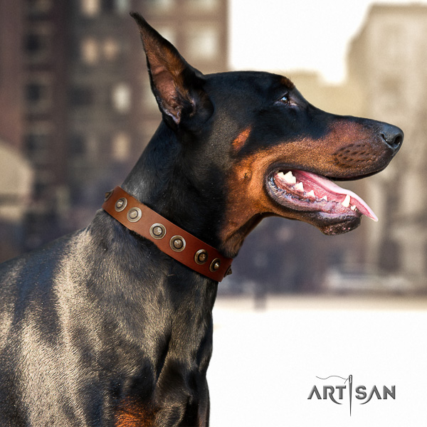 Doberman walking leather collar with adornments for your four-legged friend
