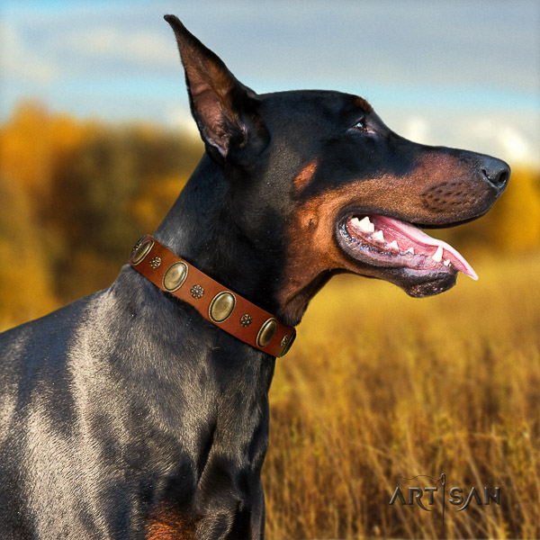 Doberman walking full grain leather collar with studs for your canine