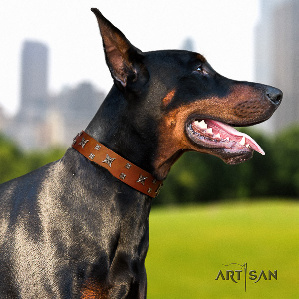 Doberman walking natural leather collar with significant embellishments for your canine