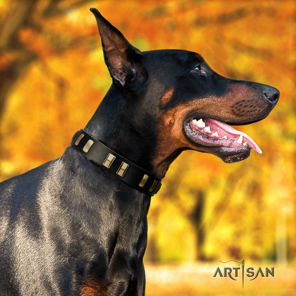 Doberman everyday walking natural leather collar with studs for your doggie