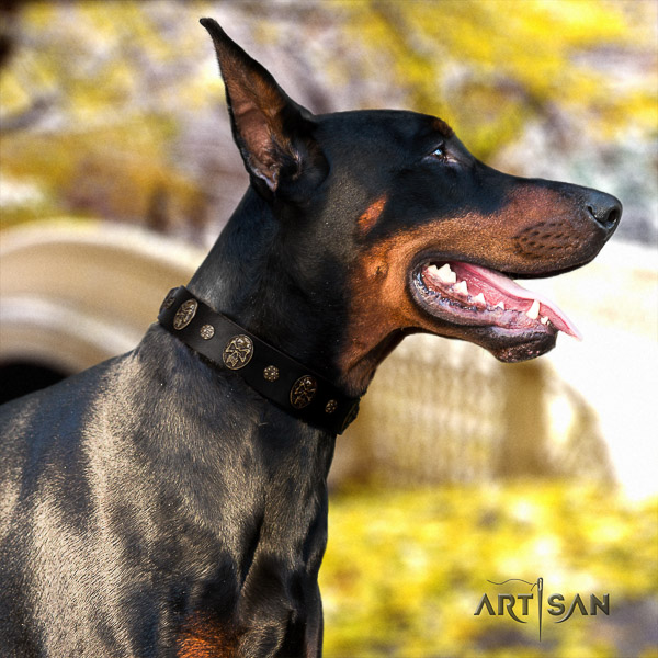 Doberman walking full grain leather collar with embellishments for your four-legged friend