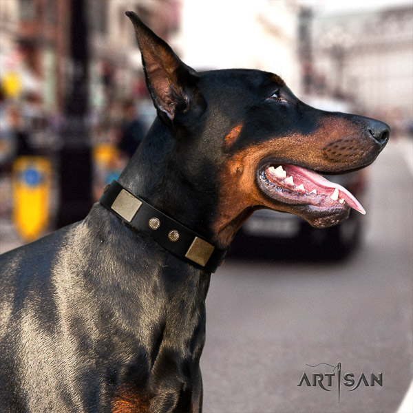 Doberman comfy wearing full grain natural leather collar with adornments for your canine