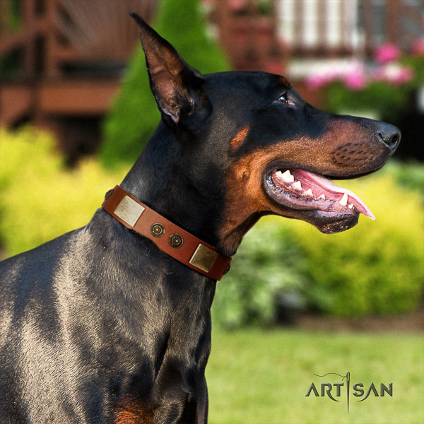Doberman daily walking natural leather collar with decorations for your four-legged friend