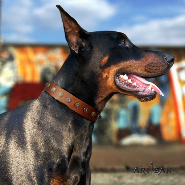Doberman natural genuine leather dog collar with embellishments for your stylish pet