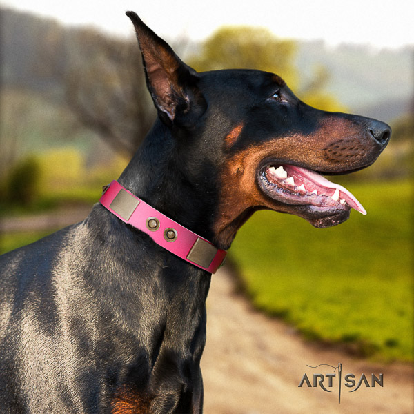 Doberman comfy wearing leather collar with embellishments for your canine
