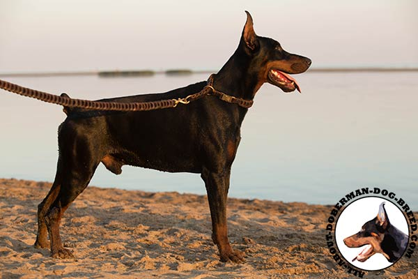 Doberman leather collar of braided design with quick release buckle for basic training